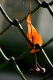 一片不同干燥叶子 免版税库存图片