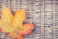 一片五颜六色的枫叶 免版税库存图片