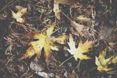 一片五颜六色的秋天叶子的极端特写镜头宏指令有美好的detai的 图库摄影