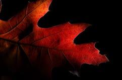 一片五颜六色的秋天叶子的秀丽 免版税库存照片