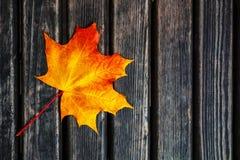 一片偏僻的秋天叶子在黑暗的背景说谎 免版税库存图片