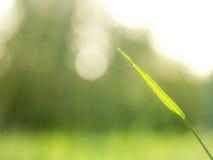 一片叶子早晨 图库摄影
