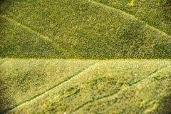 一片叶子的纹理的宏观照片在秋天 免版税库存照片