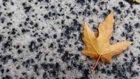 一片唯一秋天叶子 免版税库存照片