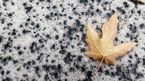 一片唯一秋天叶子 库存照片