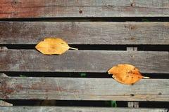 一片唯一黄色和橙色干燥白扬树叶子顶视图有阴影的在黑暗的老木地板上 免版税库存图片