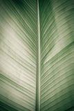 一片大蓝色叶子的纹理 图库摄影