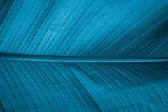 一片大蓝色叶子的纹理 免版税图库摄影
