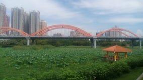 一片大绿色莲花叶子在深圳罗湖洪湖公园 免版税库存照片