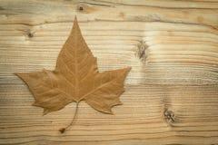 一片干燥叶子的宏指令在秋天的 免版税图库摄影