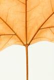 一片干燥叶子的宏指令在秋天的 免版税库存照片