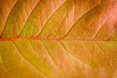 一片干燥叶子的宏指令在秋天的 图库摄影