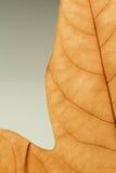 一片干燥叶子的宏指令在秋天的 免版税库存图片