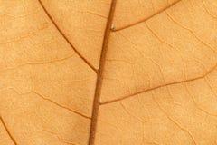 一片干燥叶子的宏指令在秋天的 库存照片