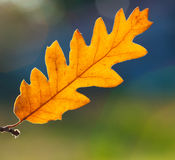 一片干燥叶子的宏指令在秋天 库存图片