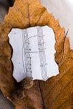 一片干燥叶子的宏观看法有纸的与autu音符  库存照片