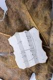 一片干燥叶子的宏观看法有纸的与autu音符  库存图片