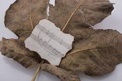 一片干燥叶子的宏观看法有纸的与autu音符  免版税库存图片