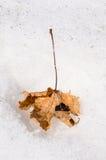 一片干燥叶子 库存图片