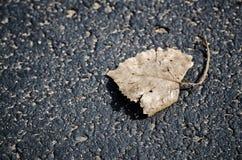 一片干燥叶子 免版税库存图片
