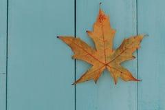 一片干燥棕色叶子的宏指令在秋天的 免版税库存图片