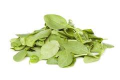 一片新鲜的绿色菠菜叶子 图库摄影