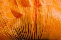 一片明亮的橙色鸦片叶子的宏观照片 免版税库存图片