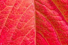 一片明亮的秋天叶子的纹理 免版税库存图片