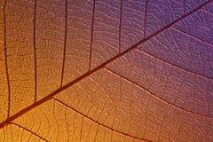 一片最基本的叶子的纹理 免版税库存照片