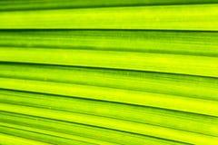 一片棕榈叶的纹理背景的 库存照片