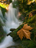 一片棕色叶子在The Creek 库存照片