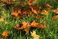 一片棕色叶子 库存图片