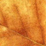 一片棕色枫叶的纹理 库存图片