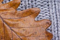 一片橡木叶子的纹理在羊毛衫的,秋天概念 免版税库存照片