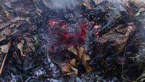 一片灼烧的橡木叶子的Timelapse loopable录影在大堆的灰的叶子和枝杈在秋天在4k 3840映象点, 10fps 股票视频