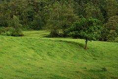 一片真实的树荫,绿叶也是象征对个人激情和生命力的追求 库存图片