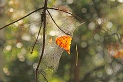 一片秋天橙色叶子在树枝垂悬 库存照片