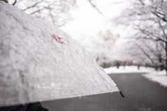 一片红槭叶子和雪在透亮伞 免版税图库摄影