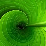 一片绿色叶子的纹理 免版税库存照片