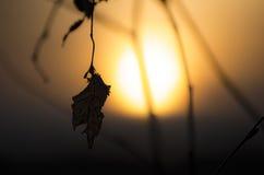 一片老叶子的剪影 库存照片