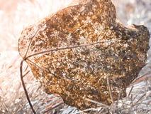 一片老秋天叶子的抽象背景纹理 特写镜头叶子静脉 免版税库存图片