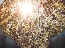 一片老秋天叶子的抽象背景纹理 特写镜头叶子静脉 免版税图库摄影