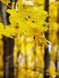 一片落的叶子在秋天森林里 免版税库存图片