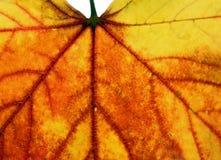 一片金黄秋天叶子的特写镜头 库存图片