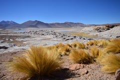 一片高沙漠 免版税图库摄影