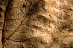 一片黄色干燥秋天叶子的纹理 免版税图库摄影