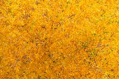 一片黄色秋天叶子的顶视图在树的作为背景 免版税库存照片