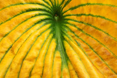 一片黄绿叶子的宏指令 免版税库存照片