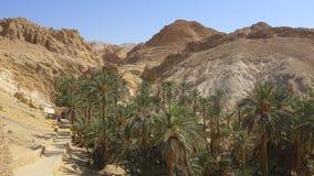 一片绿洲在撒哈拉大沙漠 图库摄影