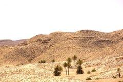 一片绿洲在阿特拉斯山脉 免版税库存图片